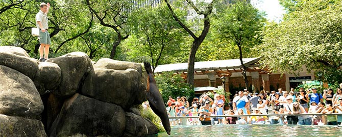 The Bronx Zoo Free Tickets Use Sightseeing Pass