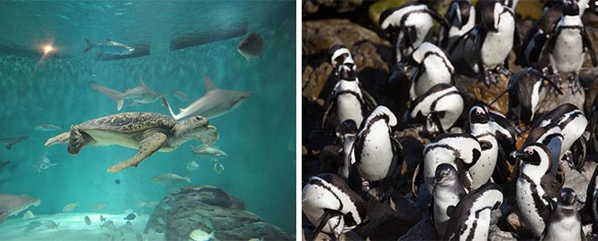 Audubon Aquarium of the Americas 2020 info and deals ...
